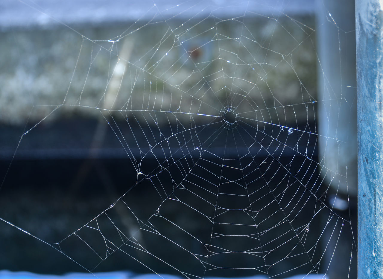 spider web, spider, web, one animal, focus on foreground, fragility, animal themes, survival, nature, intricacy, animals in the wild, outdoors, no people, close-up, trapped, day, animal leg, animal wildlife, complexity, beauty in nature