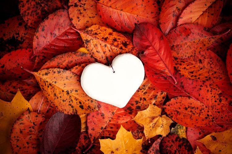 Close-up of heart shape autumn leaf