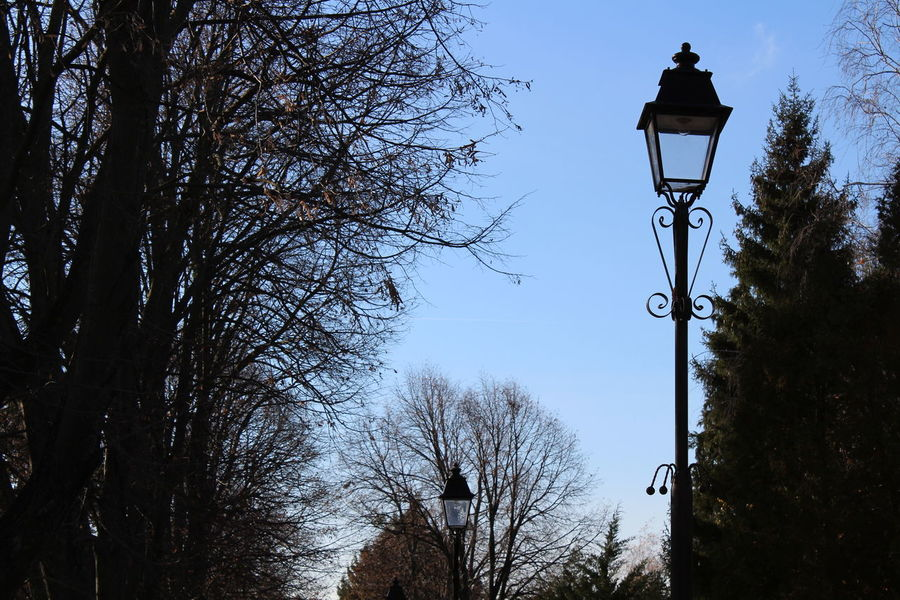 Tree Silhouette Sky No People Low Angle View Sunset Outdoors Day Tall Trees Lamp Post Blue Sky Wide Shot Leaves🌿 Autumn Sunlight Canonphotography Streetphotography HD City Urban Tradition Lamp Posts Tree Darkness And Light Metal