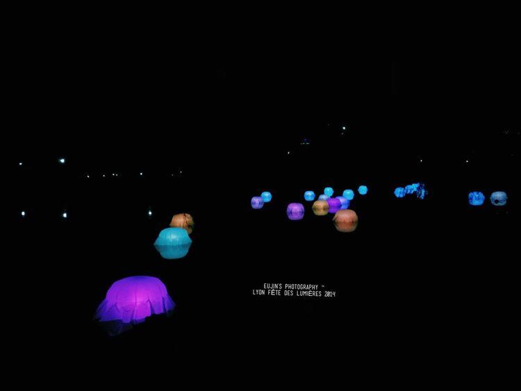 Jardin D'Hiver, Fête des Lumières, Lyon Fête Des Lumières 2014 Fdl2014 Lyon France