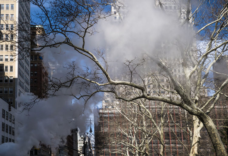 Smoke City New York New York City Smoke Air Pollution Architecture Bare Tree Building Building Exterior Built Structure City Day Nature No People Outdoors Plant Sky Skyscraper Smoke - Physical Structure Smoke Stack Subway Tree Adventures In The City The Street Photographer - 2018 EyeEm Awards