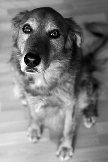 Pet Photography  DogLife❤️🐶 Dog Love Look Eyes Cute Pets Dogs Dogstagram Dog❤ Blackandwhite