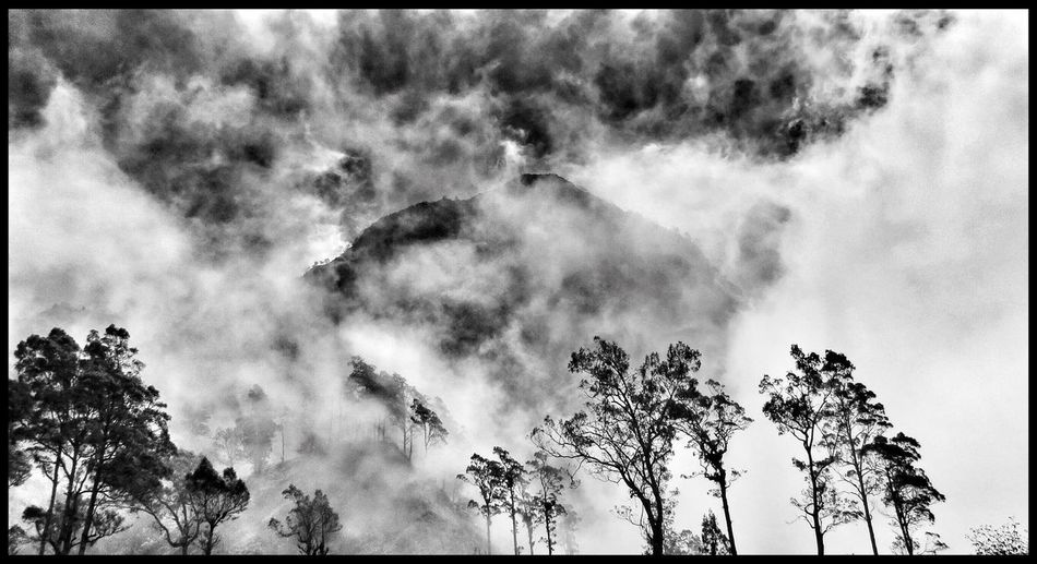 Hugging A Tree Clouds And Sky EyeEm Nature Lover Blackandwhite