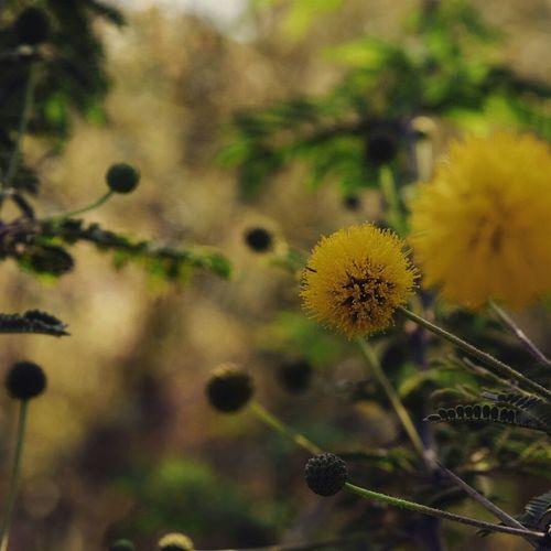 Flower Macro Taking Photos Macrophotography Follow Like The_nikon_