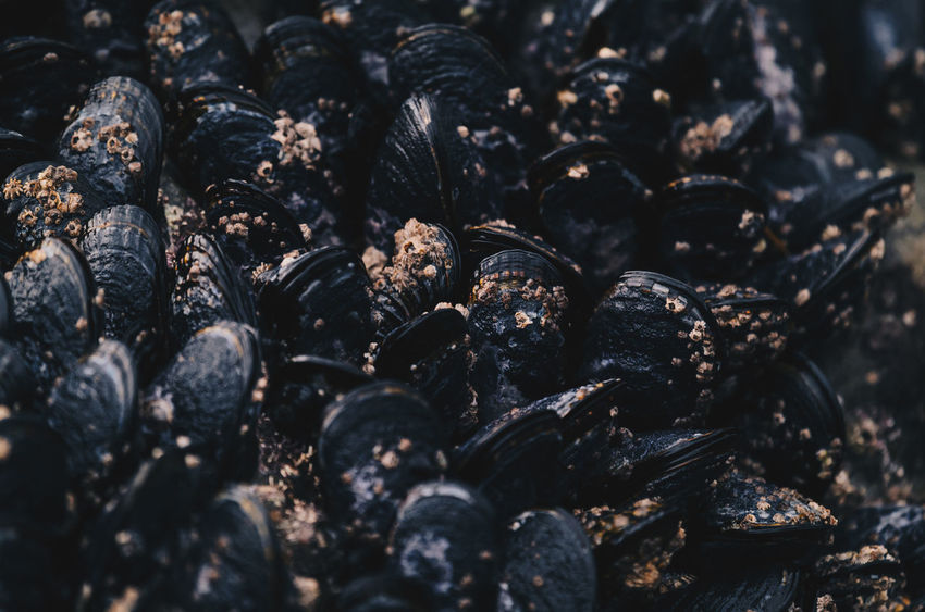 Backgrounds Black Color Clams Close-up Day Food Food And Drink Food And Drink Full Frame Intertidal Nature No People Outdoors Seafood Seafoods Shell Shells