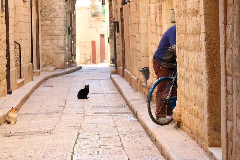 Architecture Bicycle Building Exterior Built Structure Cats City Domestic Animals Mammal Men Oldtown One Animal One Man Only One Person Outdoors Streetphotography