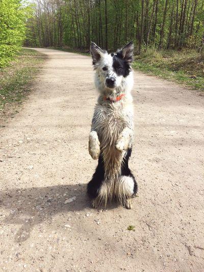 Portrait of dog on pathway