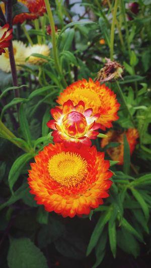 Flowers,Plants & Garden Light And Shadow Enjoying The Sights EyeEm Best Shots Nature_collection Garden
