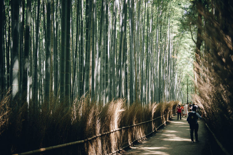 People walking on footpath amidst bamboo grove