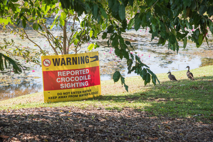 Darwin, Northern Territory, Australia-September 14,2018: Reported crocodile sighting warning sign by wetland pond in Darwin, Australia Text Communication Western Script Sign Plant Nature Day Tree No People Warning Sign Information Land Grass Information Sign Capital Letter Sunlight Message Red Yellow Animal Themes Safety Water's Edge Wetland Pond Lotus Water Lily Lotus Pond Lake Sunny Crocodile Saltwater Crocodile Sighting Warning Warning Signs  Warning Symbol Serious Precaution Caution Caution Sign Danger Dangerous Dangerous Animals Dangerous Situation Darwin Northern Territory Australia Red And Yellow Vibrant Color Landscape Guidance Pacific Black Duck