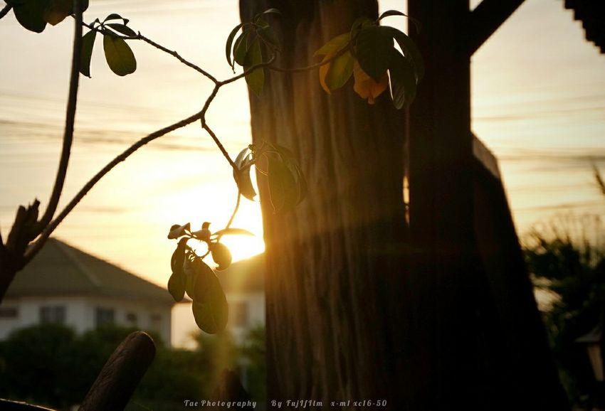เ ย็ น ๆ Relaxing Taking Photos Enjoying Life Freedom Fujifilm X-m1 Walking Around Sunset EyeEm Best Shots EyeEm Best Edits Hello World