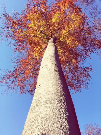 Low Angle View Sky Plant Tree Nature No People Clear Sky