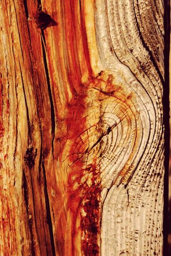 Textured  Tree Trunk Backgrounds Full Frame Rough Wood - Material Pattern Close-up Wood Grain Tree Nature Knotted Wood No People Day Outdoors End Of Summer Summertime Multi Colored Fullframe Sunlight Newjerseyphotographer Newjersey Fortescue Bay EyeEm Selects Tranquil Scene