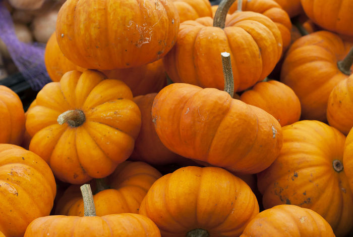 Miniature pumpkins wait to be sold at a farmer's market in early October. Agriculture Autumn Background Cooking Country Decorations Decorative Display Fall Food Gourd Halloween Harvest Holiday Ingredient Mini Natural October Orange Pie Pumpkin Seasonal Squash Thanksgiving Vegetables
