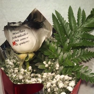 Rosanegra de http://www.graficflower.com, es una dRosa natural con los filos de los petalos en negro y preparada para su envio a domicilio, en Floresadomicilio graficflower es la Floristería mas original y exclusiva, visitanos y sorprende a los tuyos