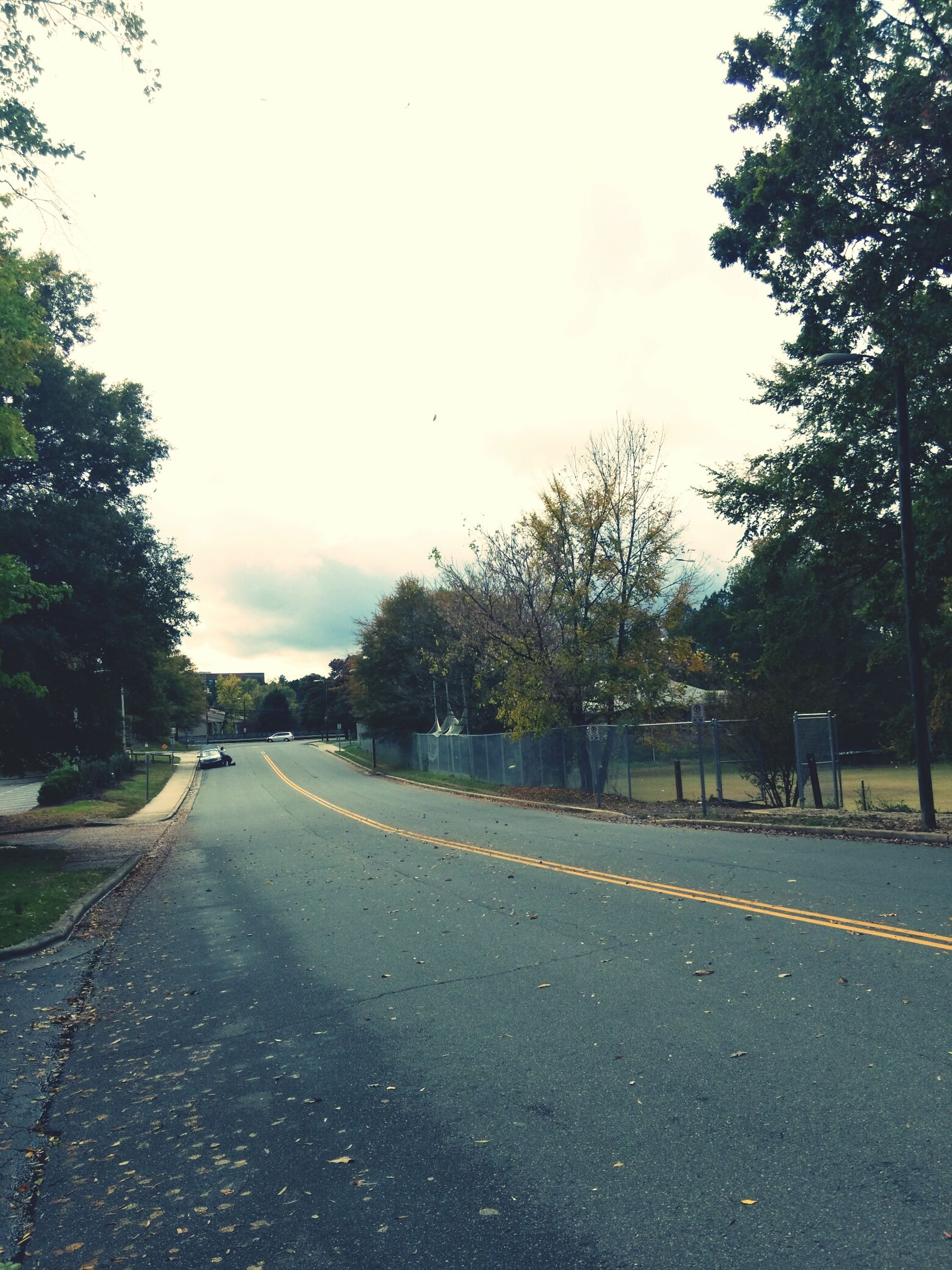 the way forward, tree, transportation, road, diminishing perspective, vanishing point, road marking, sky, street, asphalt, empty road, country road, empty, treelined, car, long, nature, outdoors, tranquility, growth