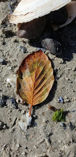 High angle view of dry leaf on rock