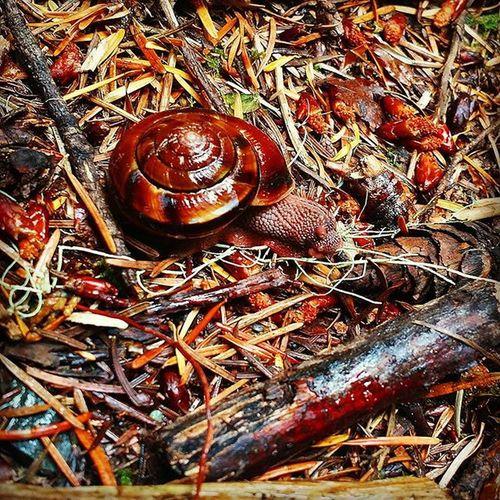 Snails make me