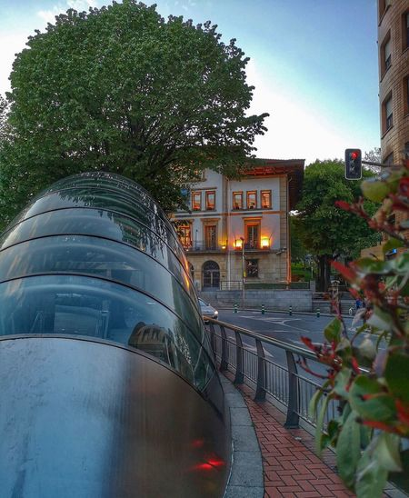 Tree Plant Architecture Nature Built Structure Building Exterior Mode Of Transportation City Street Outdoors