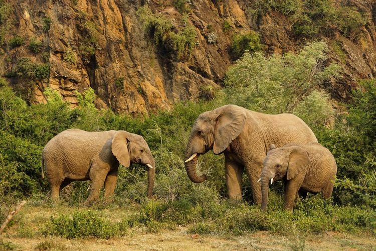 Africa South Africa Wildlife EyeEm Wildlife & Nature Wildlife Photography Africa Nature EyeEm Nature Lover Animal Themes Animal Mammal Group Of Animals Vertebrate Animals In The Wild Elephant Animal Wildlife Nature Safari Outdoors Animal Family