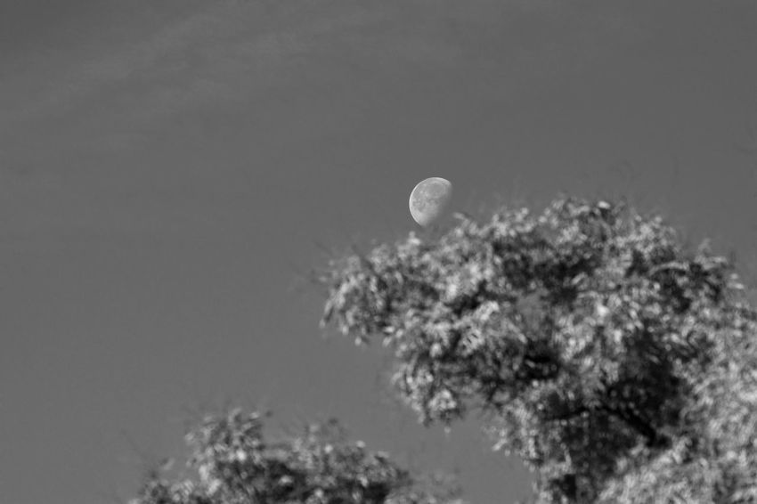 Astronomy Communication Day Environment Full Moon Growth Land Low Angle View Moon Nature No People Outdoors Plant Scenics - Nature Sky Space Sphere Tranquility Tree
