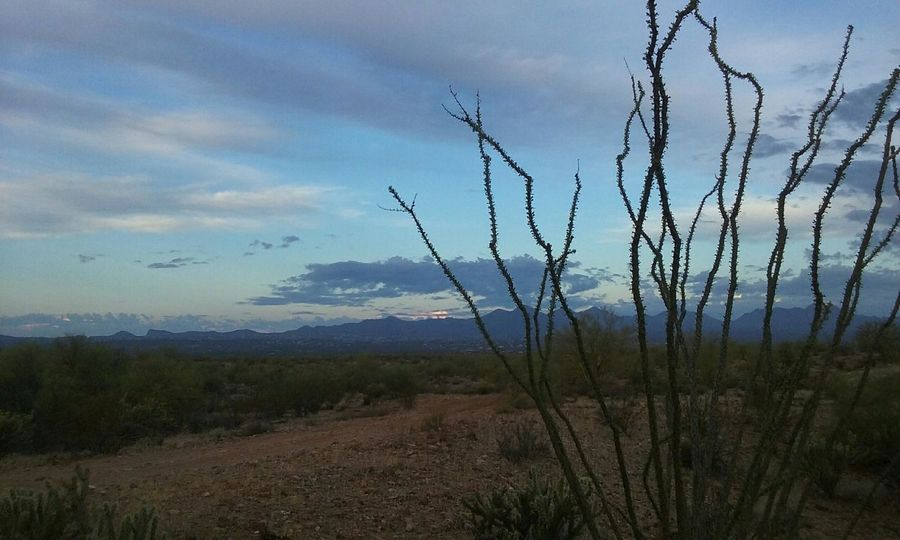 a stunning view of the desert at Ft McDowell Native American Reservation in Az Bare Tree Beauty In Nature Branch Cloud - Sky Day Desert Beauty Landscape Mountain Nature No People Non-urban Scene Ocotillo Cactus Outdoors Remote Scenics Sky Sunrise Tranquil Scene Tranquility Tree