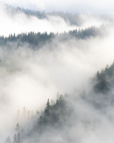 Panoramic view of trees and mountains against sky