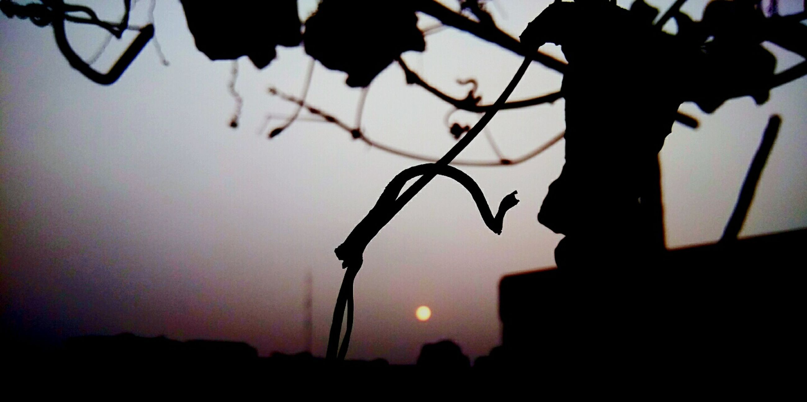 silhouette, branch, low angle view, sunset, tree, sky, dusk, focus on foreground, outline, nature, close-up, growth, outdoors, no people, street light, beauty in nature, hanging, tranquility, twig, tree trunk