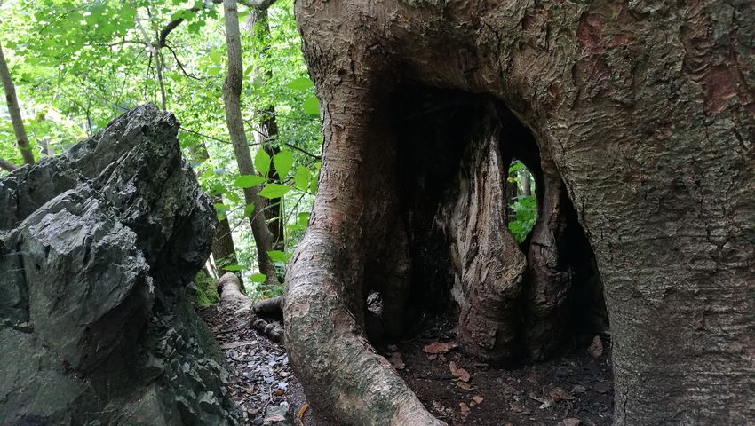 Tree Nature Tree Trunk Day Outdoors No People Forest Growth Beauty In Nature