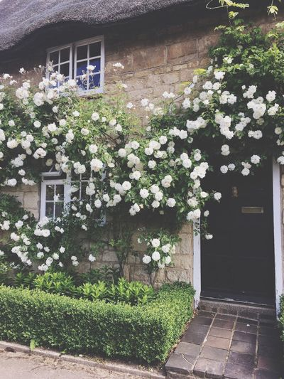 Cottage Roses Home