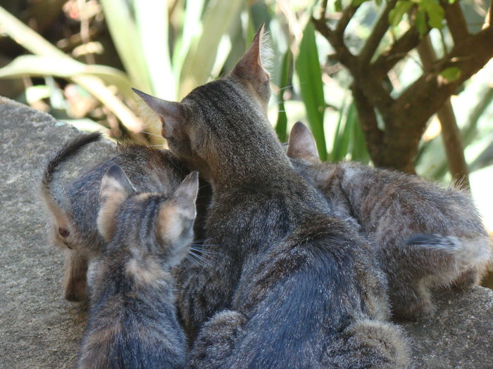 Close-up of two cats sitting on tree