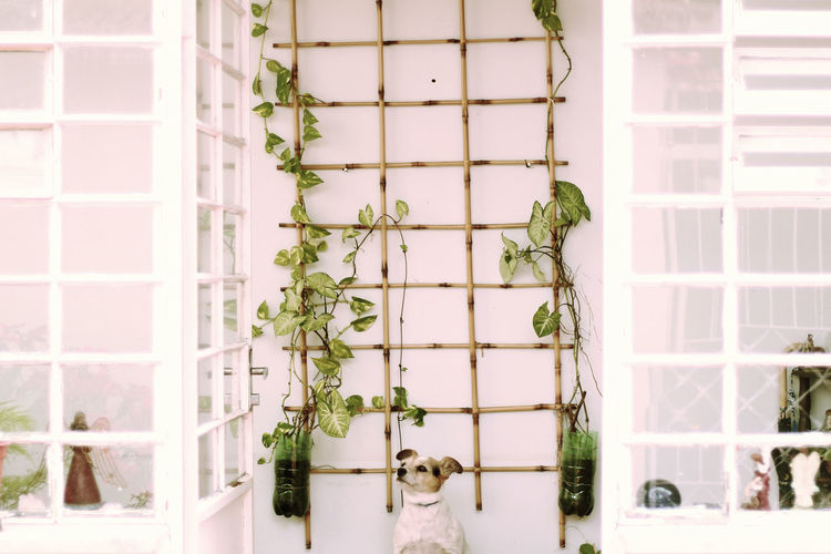 Dog sitting against creeper decoration on wall