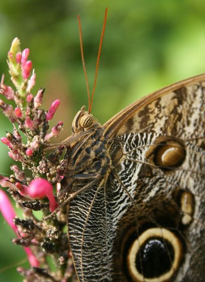 Most Stunning Shot BeautyAndMadness My_butterfly_collection ForTheLoveOfPhotography Inmygarden ThingsWithWings  Eye Em Nature Lover Streamzoofamily Hanging Out