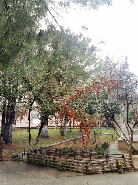 Tree Nature Flowers🌸🌷🌺🌻🍀