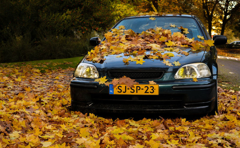 My daily! Apeldoorn Holland Nikon NikonD5200 Lightroom Nature Leafs Hanging Out Green Honda Civic EK  Coulors Autumn Autumn Leaves Auto