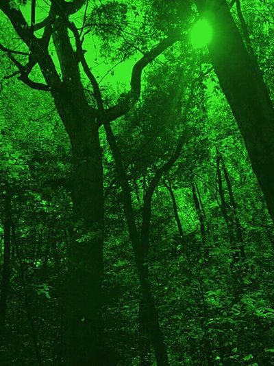 Green Nature EyeEm EyeEm Nature Lover EyeEm Gallery Ents In The Forest Photo Edit Smartphone Photography Tint