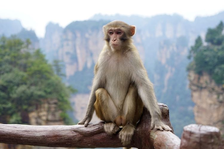 Monkey in the mountains