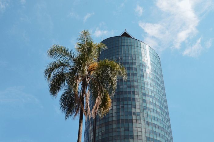 Eye4photography  Pattern Low Angle View Architecture Built Structure Building Exterior Sky Tree No People Outdoors Day Palm Tree Nature City City Landscape City_collection Urban Urban Geometry Urban Landscape From My Point Of View