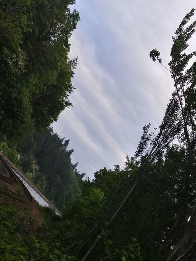 Beauty In Nature Day Forest Growth Low Angle View Nature No People Outdoors Sky Tree