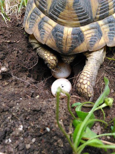 New life Turtle 🐢 Turtle Animal Wild MiracleofLife Nature