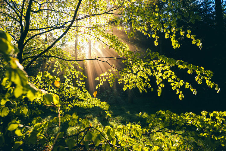 Yellow flowering plants and trees in sunlight