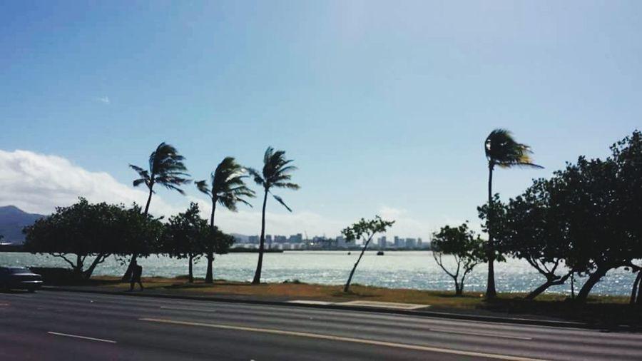 Hawaii Honalulu Windy Palm Tree Ocean Waterfront Trees Airport