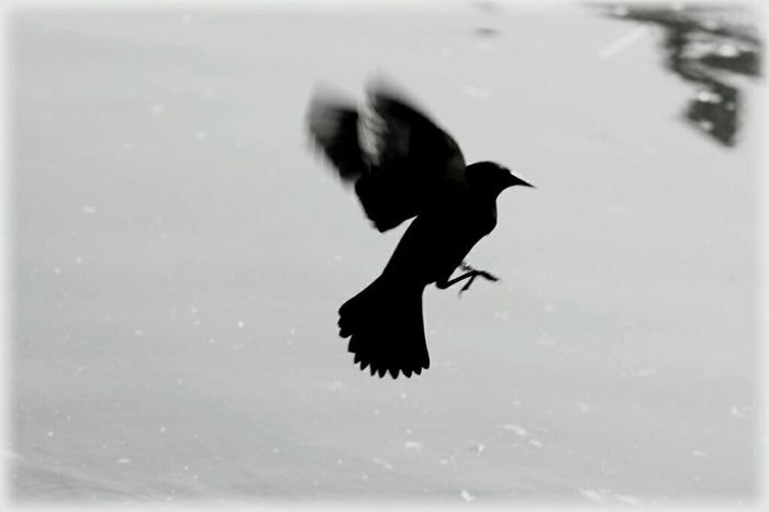 Canon 70d Black & White Moment Lens EyeEm The Best Shots Bird Nature_collection 75 -300mm My Unique Style FromChile