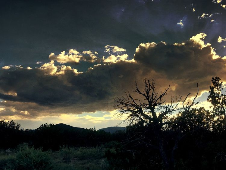 """""""Sunset Silhouettes"""" The living and the dead pay homage to another New Mexico sunset. New Mexico Skies New Mexico Photography New Mexico Dead Branches Clouds And Sky Mountains Evening Sky Sundown Dusk Sunset Silhouettes Sunset_collection Sunset Sky Tree Cloud - Sky Silhouette Dramatic Sky"""