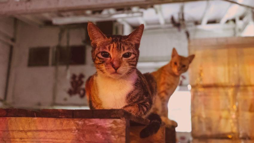 Pets Domestic Cat Portrait Feline Window Close-up