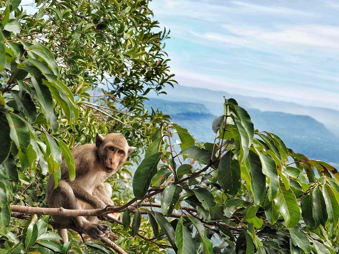 Monkey sitting on tree against sky