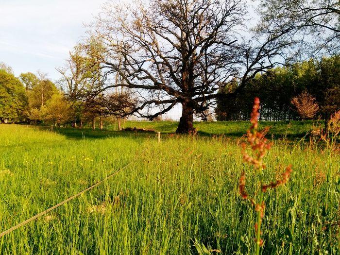 Quercia, Parco Cavour. Grass Nature Tree Oak Tree Park Italy Italy🇮🇹 Outdoors Freshness Santeña