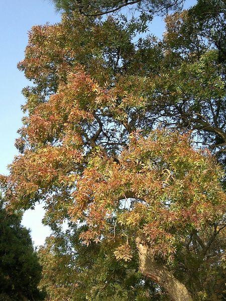 осень дерево листва Tree Autumn Foliage Leafage Arbre Feuillage Automne