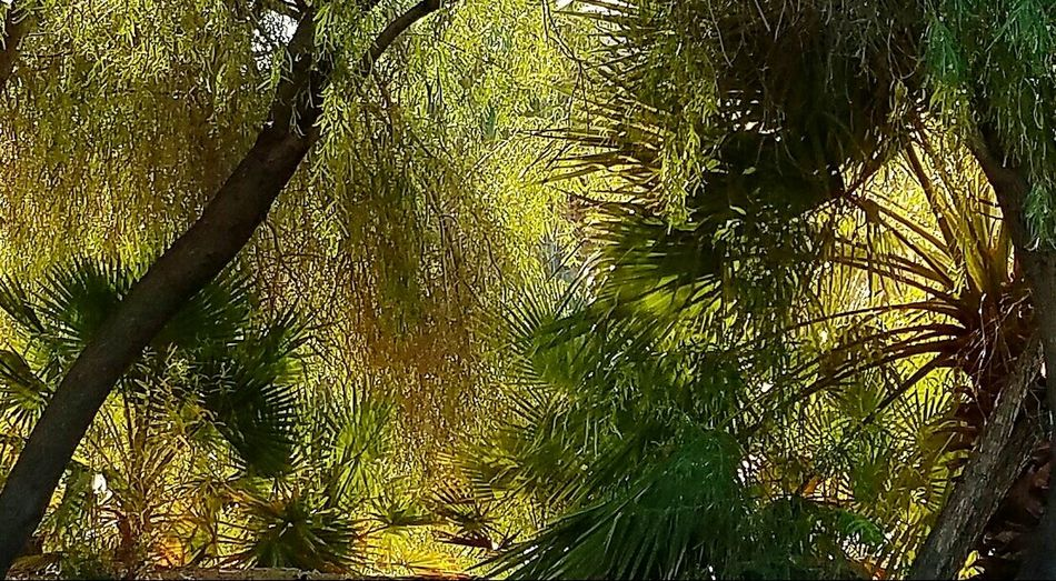 I was looking at this piece of a picture of the park, and thought, that kinda looks like a Monet painting, so ... I saved it! Alcove Of Trees Afternoon Sunlight Beauty In Nature. Peaceful Glowing Winter Walk In The Desert Relaxing Afternoon Landscape Plants Overgrowth