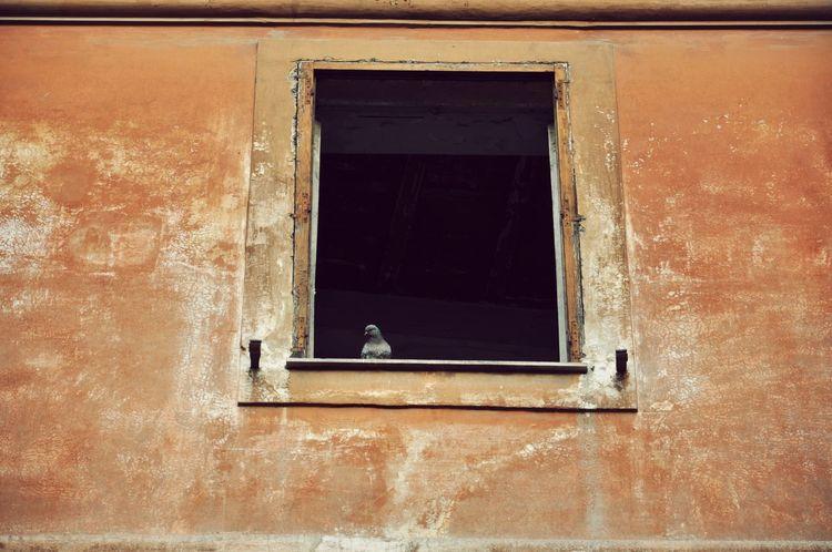 Dove Window Doves Doves, Birds Birds Of EyeEm  Birds_collection Birds🐦⛅ EyeEmNewHere The Street Photographer - 2018 EyeEm Awards